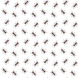 Ants vector seamless pattern for textile design, wallpaper, wrapping paper Royalty Free Stock Photography