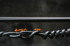 Ants walk on spiral cable. Royalty Free Stock Photos