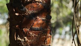 Ants walking and climbing on a tree in Australia stock video footage