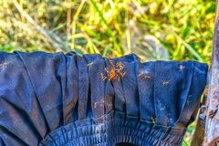 Ants walking on pants. The red ants walking on the blue pants stock images