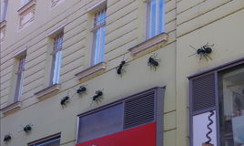Ants on the wall in city centre Brno Stock Photo