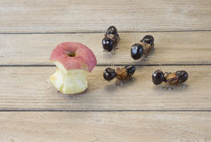 The ants want to eat apple Royalty Free Stock Images