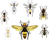 Ants and wasps. Illustration with different insect collection isolated on white background Royalty Free Stock Photos