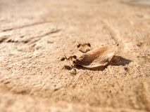 Ants working Stock Photo