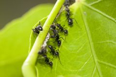 Ants Working Stock Image