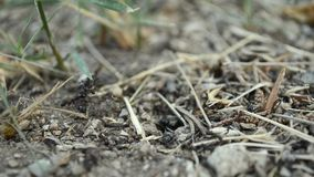 Ants working on the ground stock footage