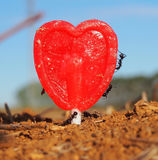Ants working with love. Ants and a heart-shaped lollipop Stock Photo