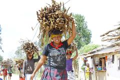 Poor malagasy people carrying branches on heads - poverty. ANTSIRABE, MADAGASCAR, SEPTEMBER 2014, Unknown malagasy people carrying branches on heads - poverty Royalty Free Stock Photos