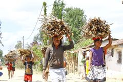 Poor malagasy people carrying branches on heads - poverty. ANTSIRABE, MADAGASCAR, SEPTEMBER 2014, Unknown malagasy people carrying branches on heads - poverty Royalty Free Stock Images