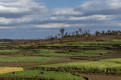 Antsirabe - Morondava madagascar Fotografia Stock