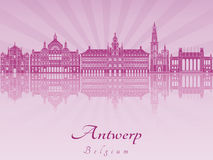 Antwerp linia horyzontu w purpurowej opromienionej orchidei Zdjęcia Royalty Free