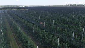 Anty gradowy ochrony siatkarstwo zakrywa jabłonie przy sadem, 4k zbiory