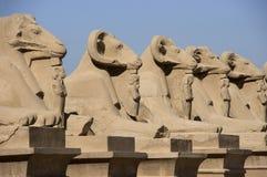 antyczna alei Egypt sfinksów podróż Zdjęcia Stock