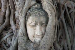 Antyczna Buddha głowa osadzająca w drzewnych korzeniach Symbol miasto Ayutthaya, Tajlandia zdjęcie royalty free