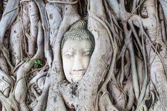 Antyczna Buddha głowa embeded w banyan drzewie od Ayutthaya, Tajlandia obraz royalty free