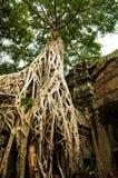 antyczna budynku korzenia ruina siedzi drzewa obraz stock