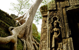 antyczna budynku korzenia ruina siedzi drzewa zdjęcia stock