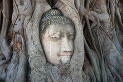 Antyczna głowa Buddha jest wrośnięta w korzenie drzewa zakończenie up Ruiny antyczna świątynia Ayutthaya Wat, Tajlandia fotografia royalty free