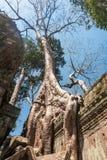 Antyczna galeria zadziwiać Ta Prohm świątynię przerastającą z drzewami Tajemnicze ruiny Ta Prohm gnieździli się wśród tropikalneg Zdjęcia Royalty Free