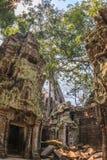 Antyczna galeria zadziwiać Ta Prohm świątynię przerastającą z drzewami Tajemnicze ruiny Ta Prohm gnieździli się wśród tropikalneg Obrazy Royalty Free