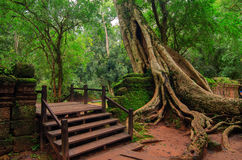 Antyczna Khmer świątynia Ta Prohm angkor Cambodia Zdjęcie Stock