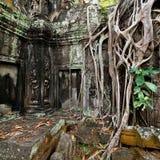 Antyczna Khmer architektura Ta Prohm ?wi?tynia przy Angkor, Siem Przeprowadza ?niwa, Kambod?a Obrazy Stock