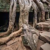 Antyczna Khmer architektura Ta Prohm ?wi?tynia przy Angkor, Siem Przeprowadza ?niwa, Kambod?a Zdjęcia Stock