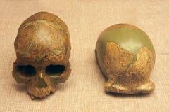 Antyczna ludzka czaszki skamielina Obraz Stock