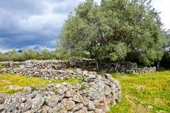 Antyczna megalityczna Serra Orrios Nuragic wioska w Sardinia, Włochy fotografia stock