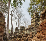 Antyczna Ta Prohm świątynia, Angkor Thom, Siem Przeprowadza żniwa, Kambodża Obrazy Stock