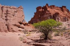 Antyczne czerwonawe rockowe formacje Suchy strefy drzewo zdjęcia stock