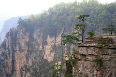 antyczne góry Zhangjiajie Obraz Royalty Free