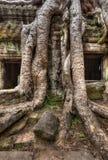 Antyczne ruiny i drzewni korzenie, Ta Prohm świątynia, Angkor, Kambodża Zdjęcie Royalty Free