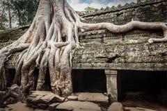 Antyczne ruiny i drzewni korzenie, Ta Prohm świątynia, Angkor, Kambodża Zdjęcia Royalty Free