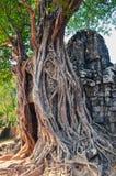 Antycznej świątyni wejście i starzy drzewni korzenie przy Angkor Wat Zdjęcie Stock