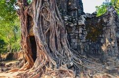 Antycznej świątyni wejście i starzy drzewni korzenie przy Angkor Wat Obrazy Royalty Free