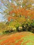Antyczni drzewa w jesieni Fotografia Royalty Free