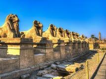Antyczni Egipscy sfinksy z głową baran w Luxor, Egipt obraz stock