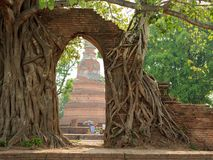 Antyczny łuk w drzewo korzeniu przy Watem Phra Ngam zdjęcie stock