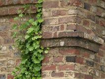 antyczny ściana z cegieł Zdjęcie Royalty Free