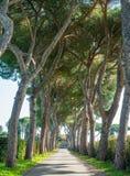 Antyczny Appian sposób Appia Antica na pogodnym wiosna ranku w Rzym, fotografia royalty free