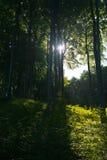 Antyczny bukowy las, ruegen Zdjęcie Royalty Free
