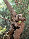 Antyczny drzewo obraz stock