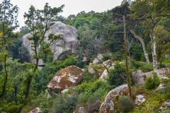 Antyczny Forest Green lasu krajobraz z kamieniami i głazami fotografia royalty free