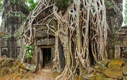 Antyczny kamienny drzwi i drzewni korzenie, Ta Prohm świątynia, Angkor, Camb Zdjęcie Stock