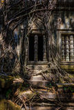 Antyczny okno z korzeniami drzewo, Obraz Stock