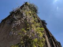 Antyczny Romański budynek z dzikimi kwiatami zdjęcia stock
