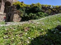 Antyczny Roma?ski budynek z dzikimi kwiatami fotografia royalty free