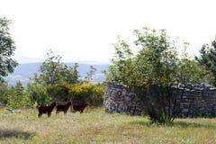Antyczny sheepfold zdjęcie stock