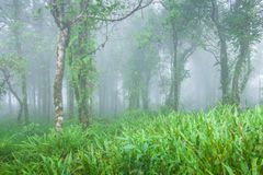 Antyczny tropikalny las w florze, mech, liszaju i paproci w mgły Świeżych przedpolach i drzewach Czystość, fantastyczna, bujny zdjęcia royalty free